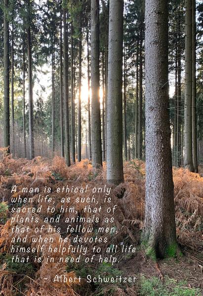 MikeSorge-Woodturner-Vertical2.jpg
