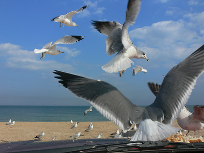 St. Augustine Seagulls 2007