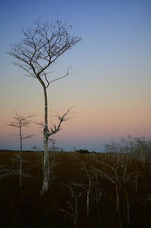 Cypress Tree Obsession