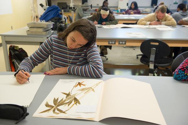 11/8/17 2D Design Class Drawing in Eckert Herbarium