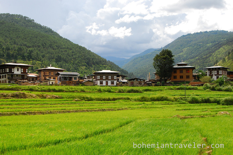 rice paddies around Divine Madman temple Bhutan.jpg