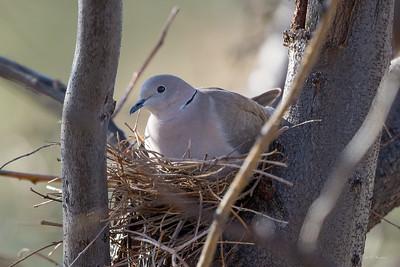 Springtime Birds 2018