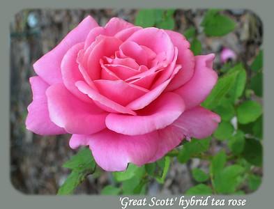 'Great Scott'