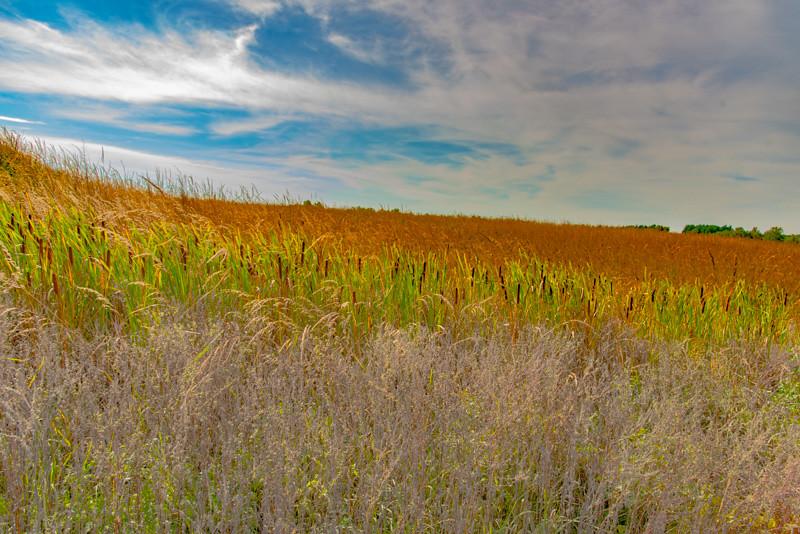 Prairie  56