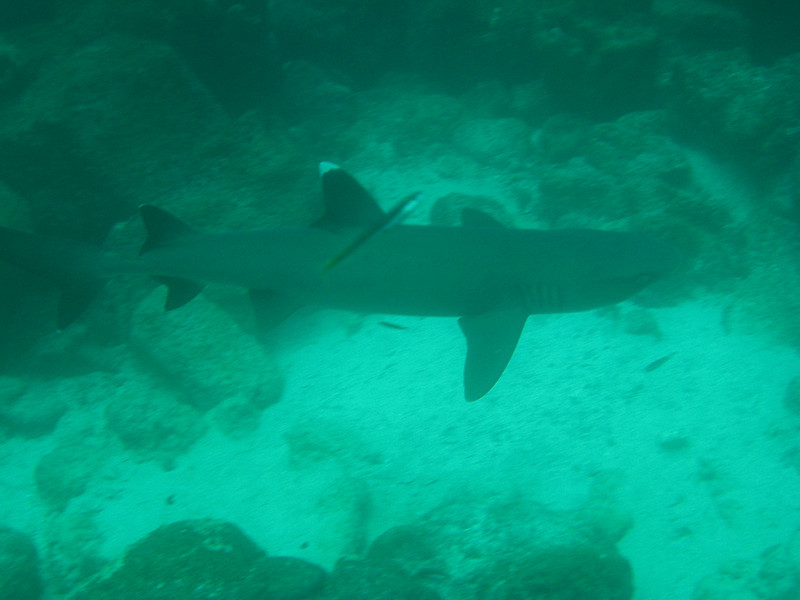 Diving in the Galapagos (104 of 392)