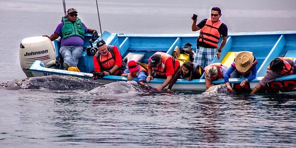 Baja Mexico Adventure - Feb 2020