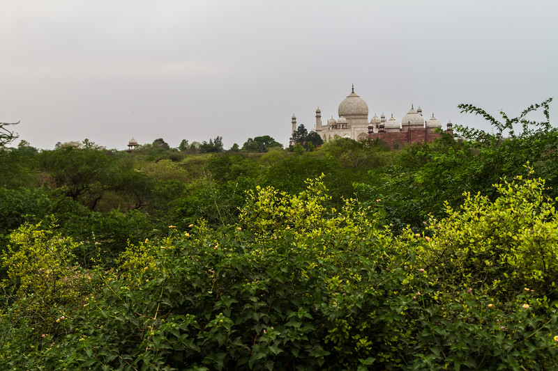 The Taj Mahal From A Distance Over Tree Tops, Agra, India, Asia