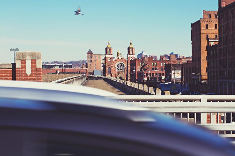 Pigeon racing a car across the David McCullough Bridge