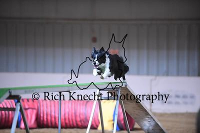 Bayshore Companion Dog Training Club AKC Agility Trial February 17-19