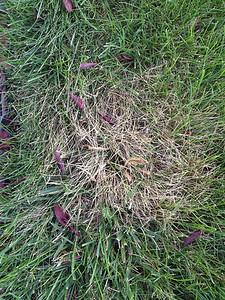 08/14/13 Grass Spots