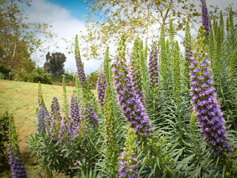 mar25_flowers.jpg
