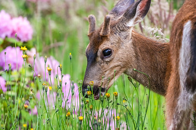 Oregon Wildlife 2021
