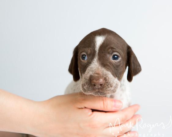 Pet Stock Photography 2