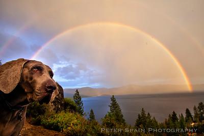 Tahoe Dawgs