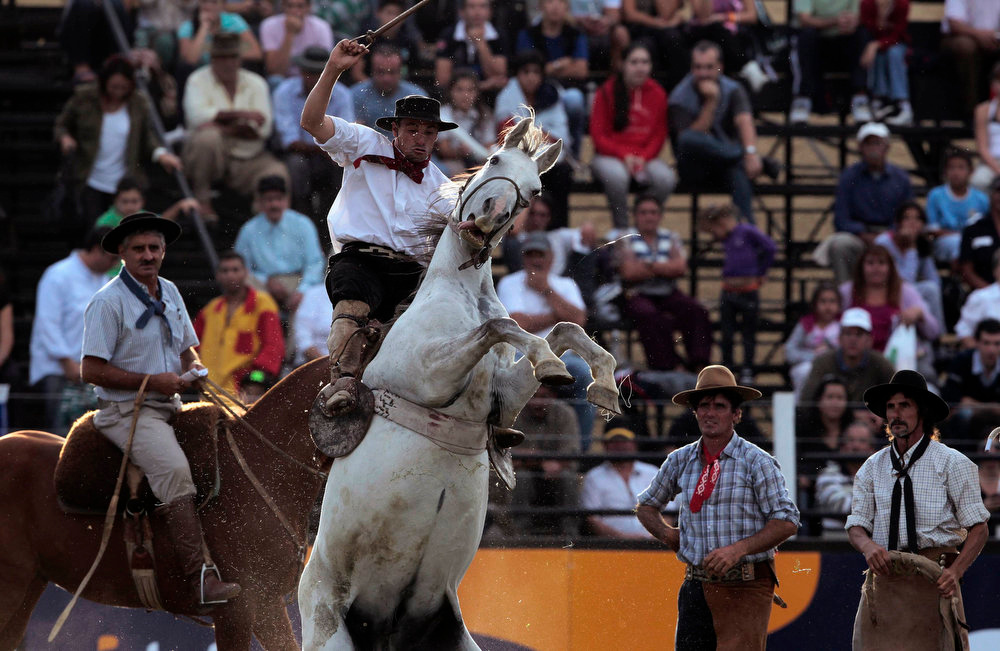 ". A gaucho rides an unbroken horse during the annual celebration of Criolla Week in Montevideo, March 25, 2013. Throughout Easter Week ""gauchos\"", the Latin American equivalent of the North American \""cowboy\"", from all over Uruguay and neighboring Argentina and Brazil visit Montevideo to participate in Criolla Week to win the award of best rider. The competition is held March 24 - March 30. REUTERS/Andres Stapff"