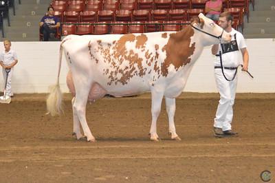 Ohio Holstein Futurity 2018