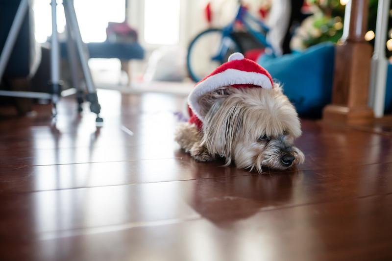 Christmas 2019-116.jpg