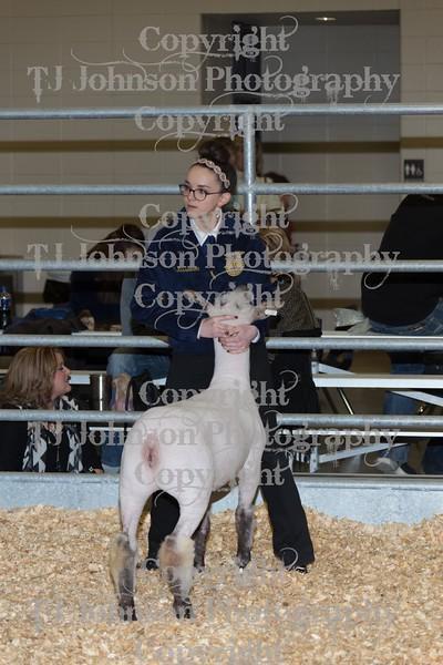 2016 KISD Lamb Show Class 4