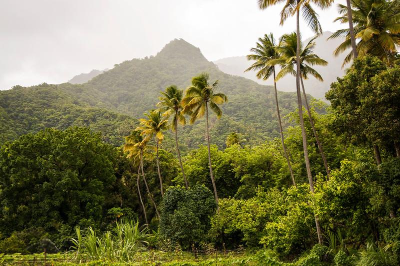 Saint Lucia Farmland