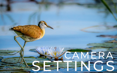 Camera Settings for Wildlife and Outdoor Photography