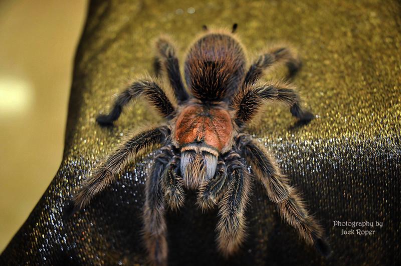 Tarantula 2  .jpg