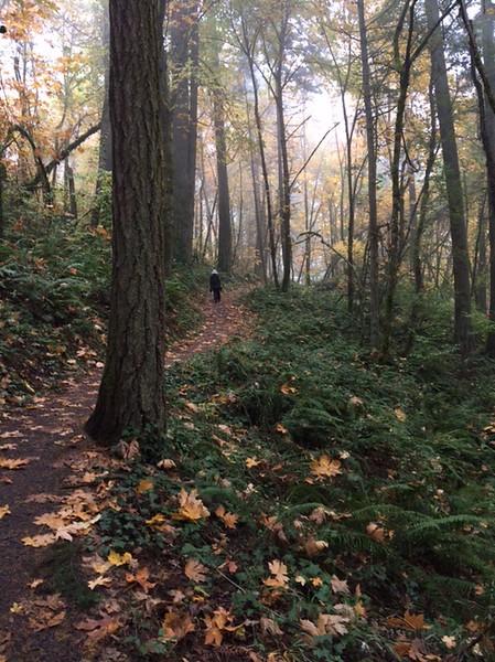 Forest walk # 2