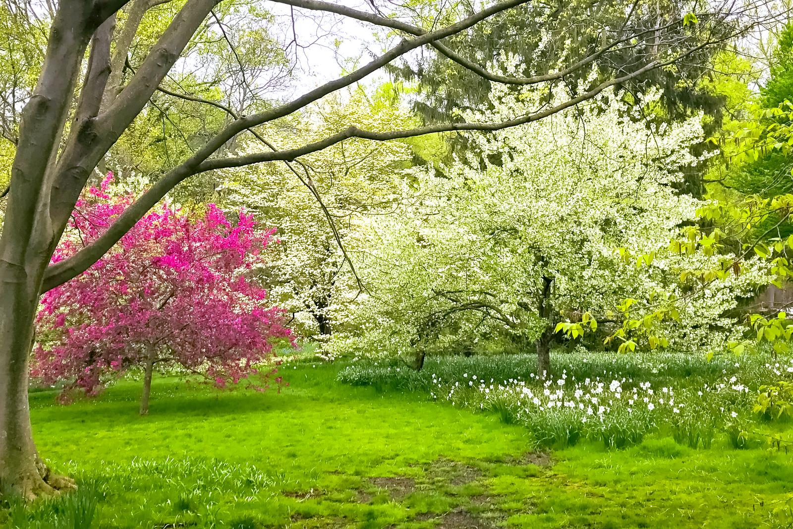 园中漫步,寻觅花香