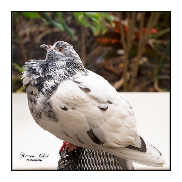 z Bird.jpg