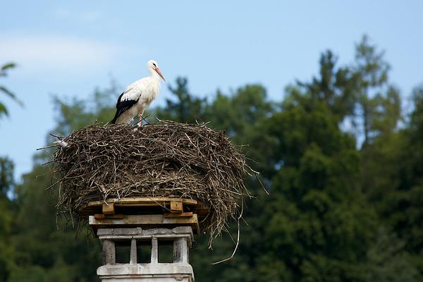 Uznach Stork Colony