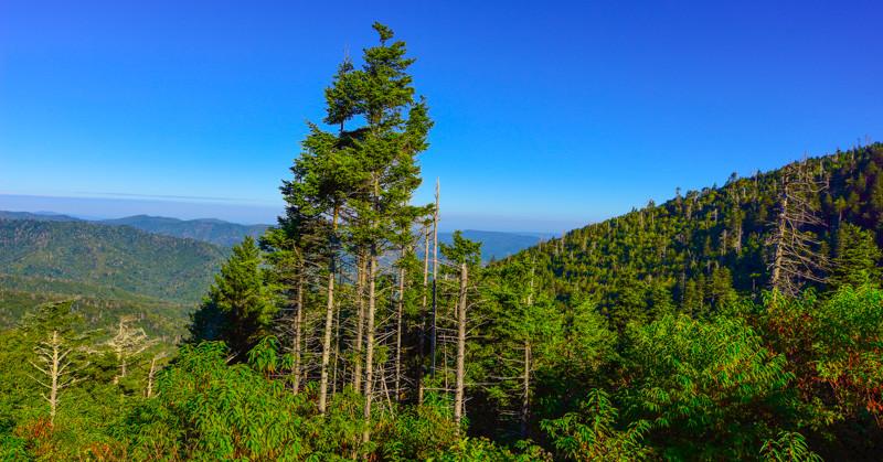 Smoky Mountains 197