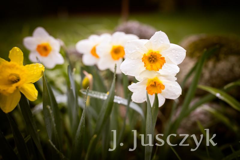 Jusczyk2021-8115.jpg
