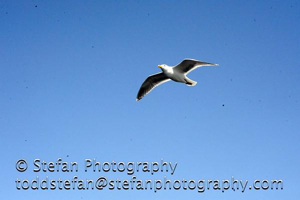 04-23-2011 Bremerton Ferry Ride