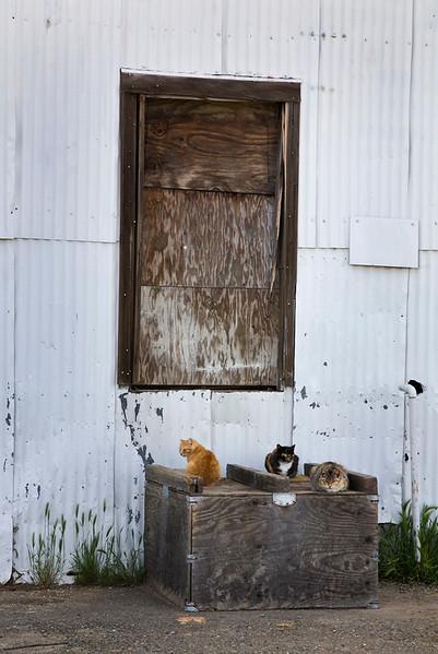 random_cats.jpg