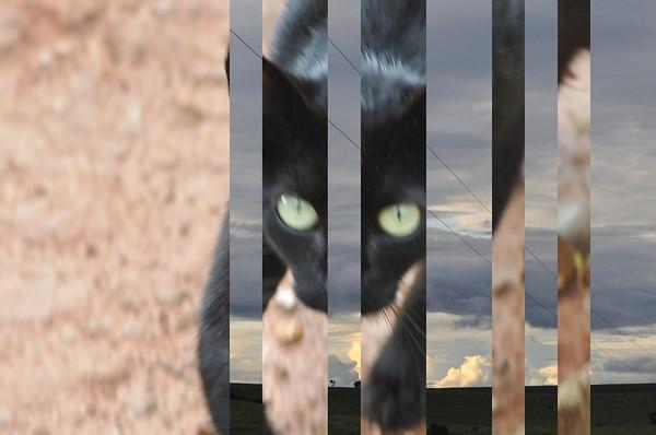 O Sonho de Cage/Cage's Dream