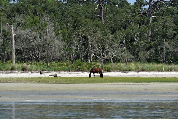 Jekyll Island Boat Tours Dolphin Daze Horses 08-30-20