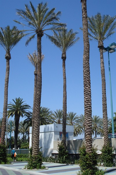 California Palms.jpg