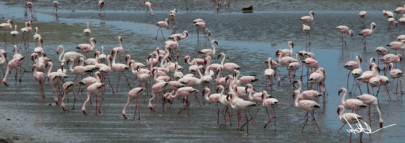 FlamingosS-2.jpg