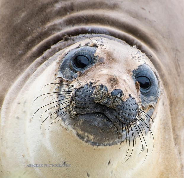 Seal face.jpg