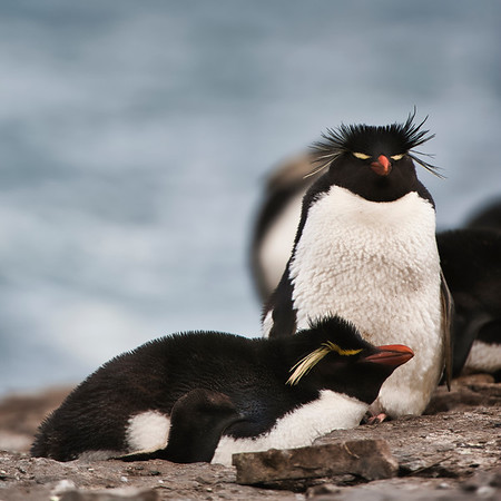 Falkland Islands Wildlife Photography Trip Dec 2020