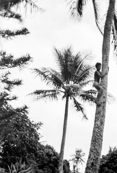 Boy Climbing Noumean Palm.jpg