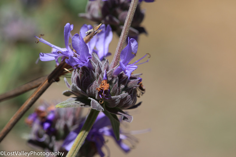 Flora-0298.jpg