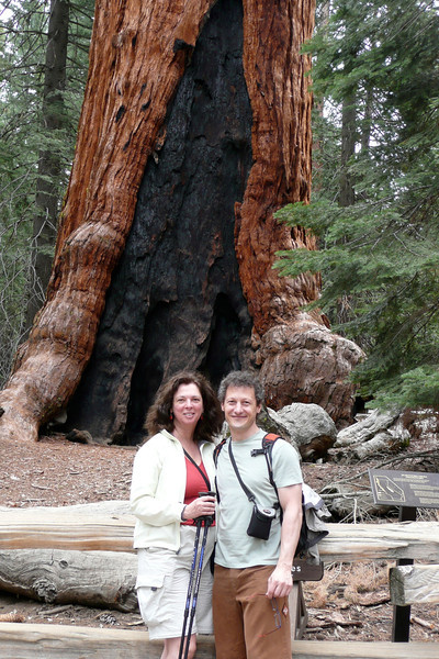 Grizzly Giant. Mariposa Grove, Yosemite NP