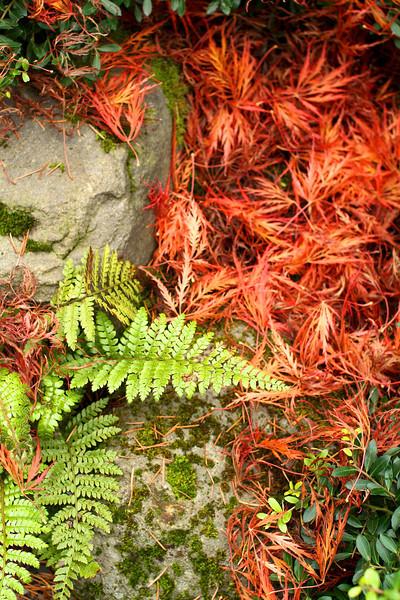 Portland Japanese Garden  11-11-11  3536.jpg
