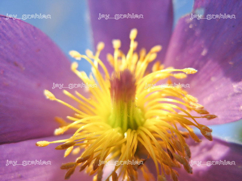20100329_Flowers07.jpg