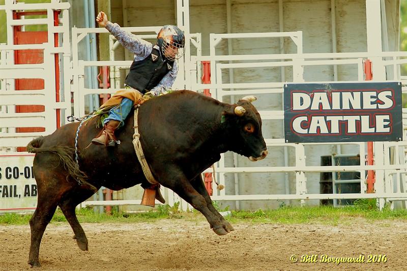 Steer Riding - Daines Pick-nic 2016 0117.jpg