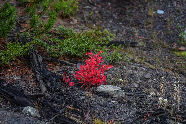 9-30-17 Bella Coola - Fall Colours