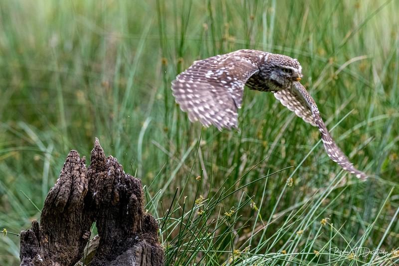 The Little Owl Shoot-6751.jpg