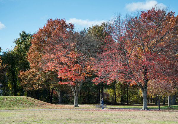10/28/19 Wesley Bunnell | StaffrrA visitor to Norton Park on Monday walks under two large trees with leaves turned red for the fall on Monday afternoon.