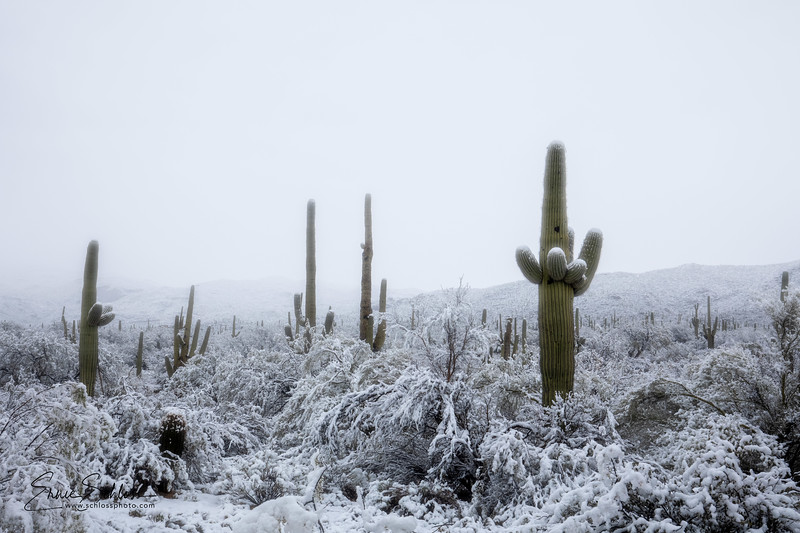 Saguaro East Snow 1-2-2019a 1-2-2019c-.jpg