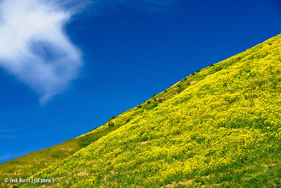 carrizo plain wildflowers — april 2017